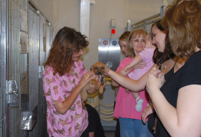 Gallery of Images of  Animal Shelter