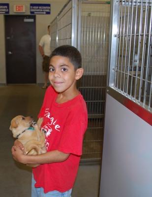 Animal Shelter Gallery Image 2