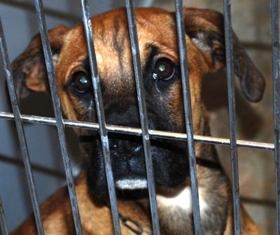 Animal Shelter Gallery Image 6