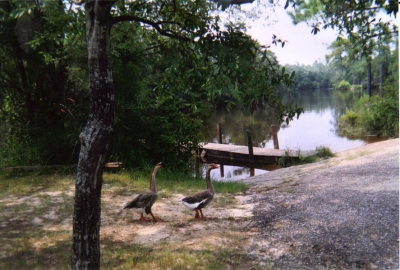 Chickasabogue Park Gallery Image 4