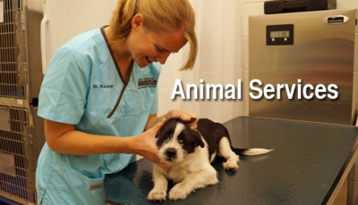 Animal Shelter Home Gallery Image 2