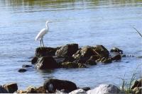 Bayfront Park Gallery Image 10